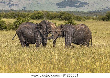 Masai Mara Game Reserve, Kenya  № 3362388 загрузить