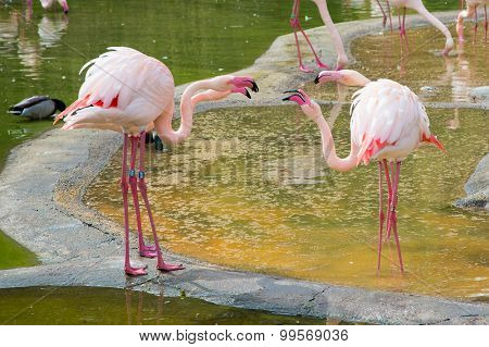 the american view on the plastic pink flamingo in the plastic pink flamingos a natural history an es Best answer: one of the best sources on the history of pink flamingos is the story the plastic pink flamingo: a natural history by.