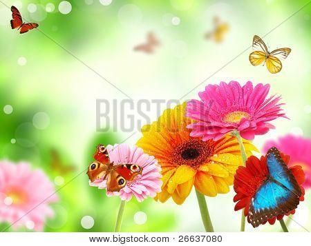 Цветок на открытку