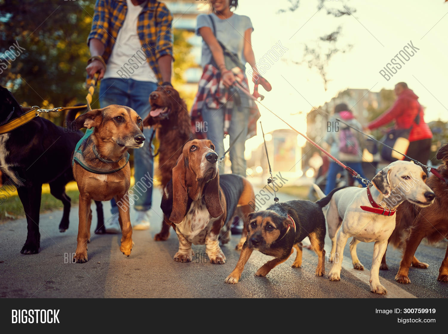 animal,background,beautiful,canine,city,collars,companions,couple,cute,dog,dogs,dry,enjoy,friend,funny,group,happy,jack,lead,leash,leather,lifestyle,love,mammal,man,nature,outdoor,outdoors,pack,people,person,pet,pets,professional,rescue,russell,service,sidewalk,smiling,street,summer,terrier,urban,walk,walker,walkers,woman,young