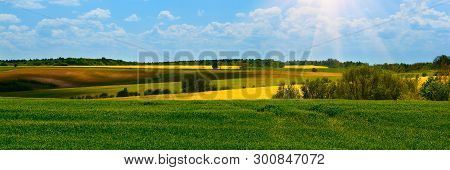 Banner 3:1. Green wheat and Yellow rapeseed fields in bloom. Spring background. Copy space. Soft focus stock photo