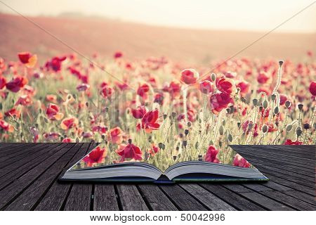 Creative concept pages of book Beautiful landscape image of Summer poppy field under stuning sunset sky with cross processed retro effect stock photo