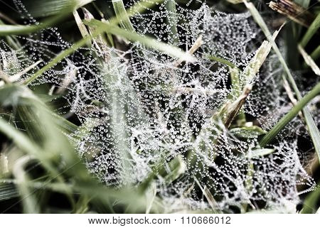 Macro - water drop on spider web in the morning. stock photo