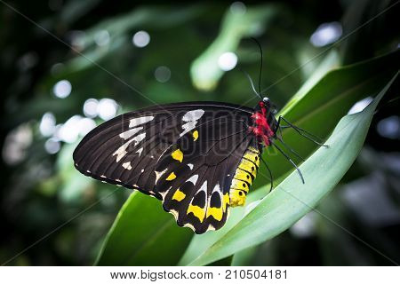 The butterfly with black, yellow and white wings on the green leaf stock photo