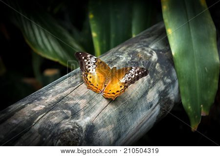 The yellow brown butterfly on the wood fence stock photo