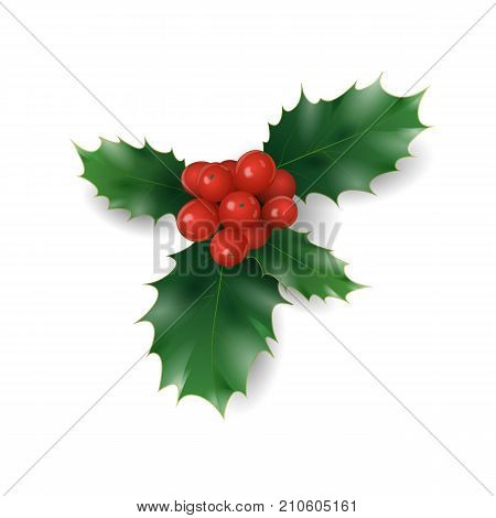 Holly branch with red berries Christmas symbol. Holiday traditional decoration New Year wreath part green leaves. Isolated on white realistic 3d vector illustration art stock photo
