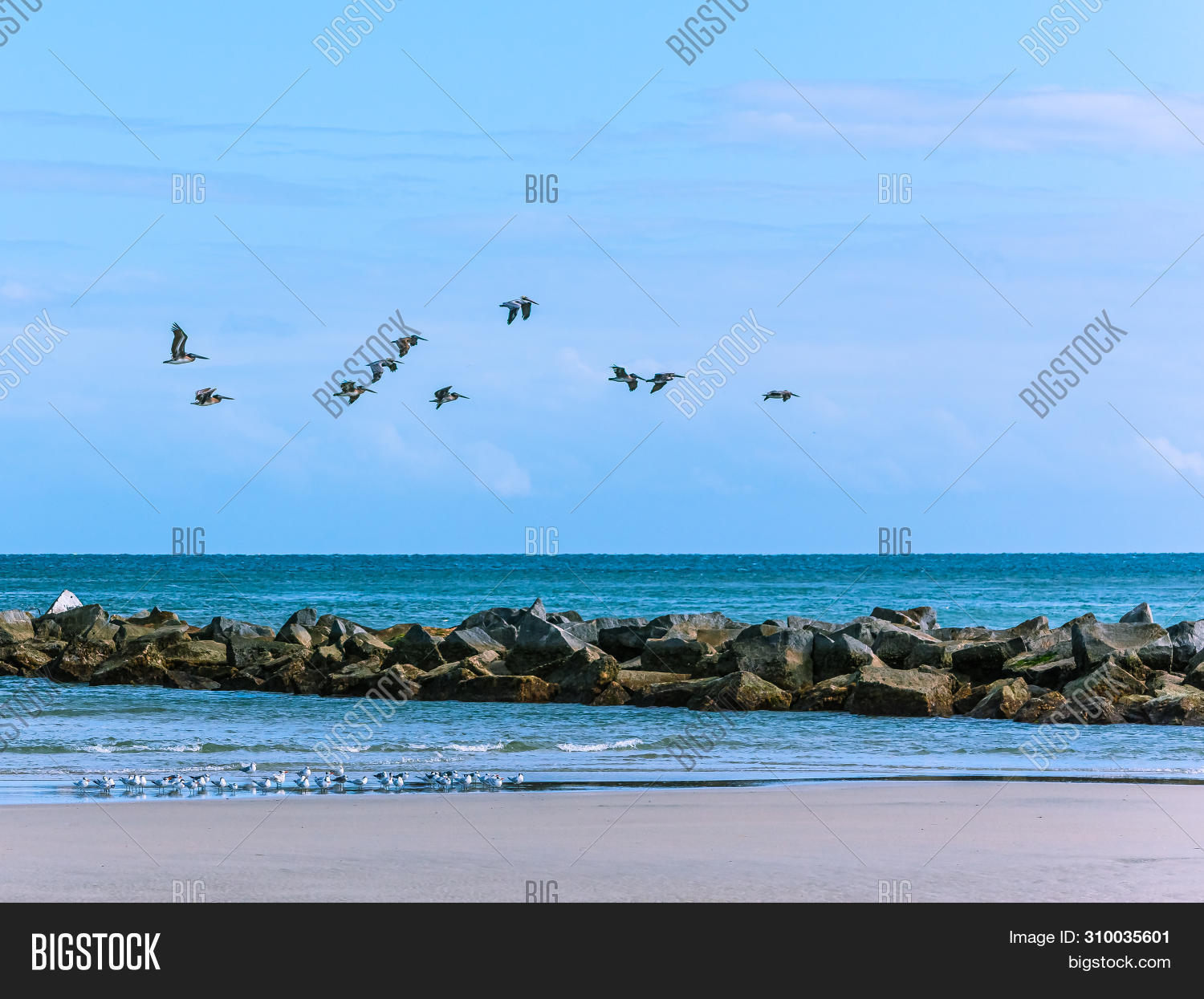 Florida,action,air,animal,background,beach,bird,blue,boulders,brown,clouds,color,flight,fly,flying,gull,horizon,inlet,jetty,message,nature,peaceful,pelican,points,river,rocks,royal,sand,scenic,seascape,shapes,sharp,shorebird,sky,space,stone,sunshine,surf,tern,textures,togetherness,tranquil,turquoise,wading,water,waves,wildlife,wings,copy
