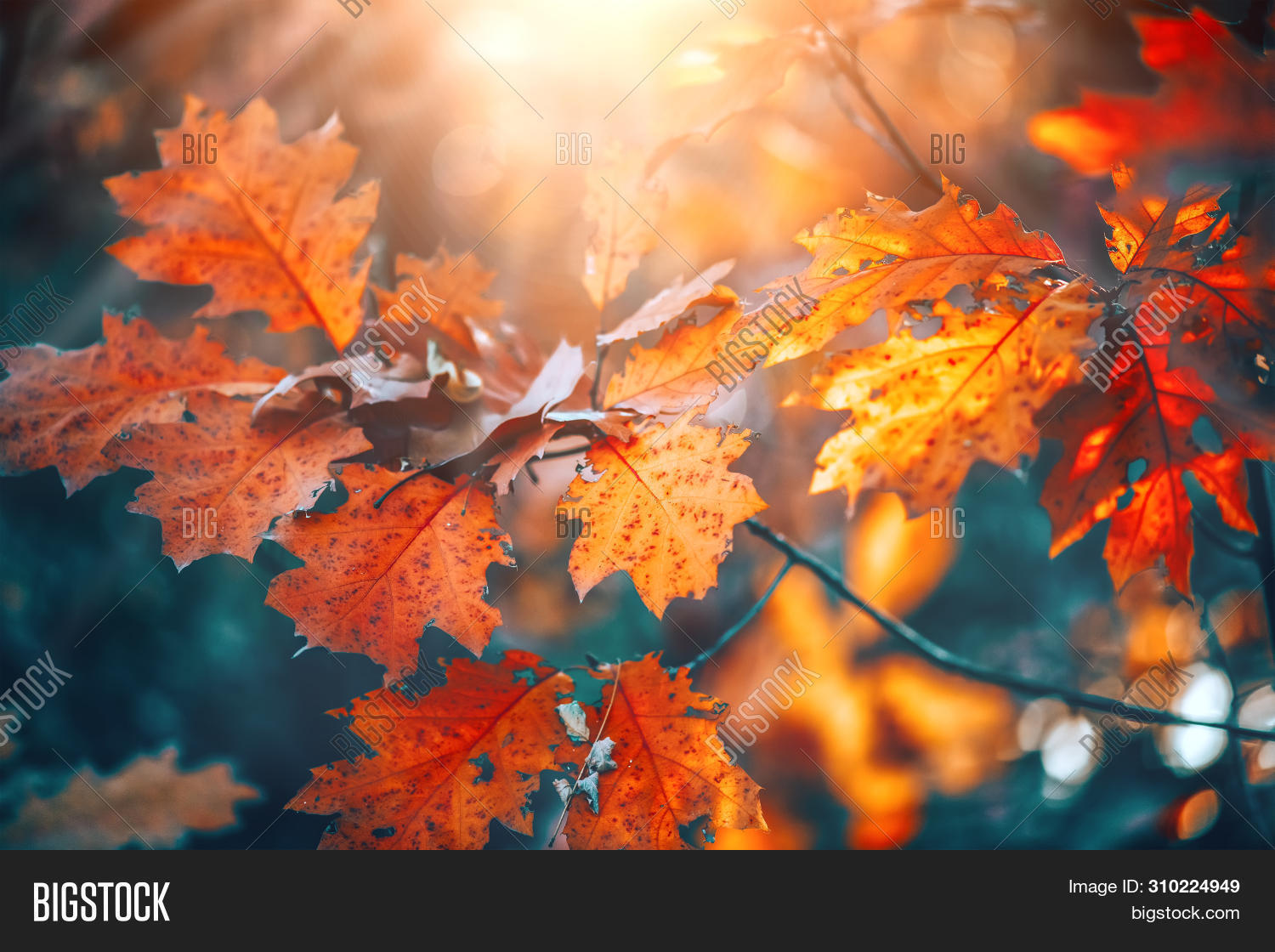 autumn,autumn background,autumn leaves,autumnal,background,backlit,beautiful,beauty,bokeh,branch,bright,change,color,colorful,colors,colour,colourful,concept,fall,falling leaves,flare,foliage,forest,landscape,leaf,leaves,light,lush,maple,natural,nature,november,oak,october,orange,outdoor,park,plant,red,scene,season,sun,sunlight,sunny,tree,trees,vibrant,vivid,woods,yellow