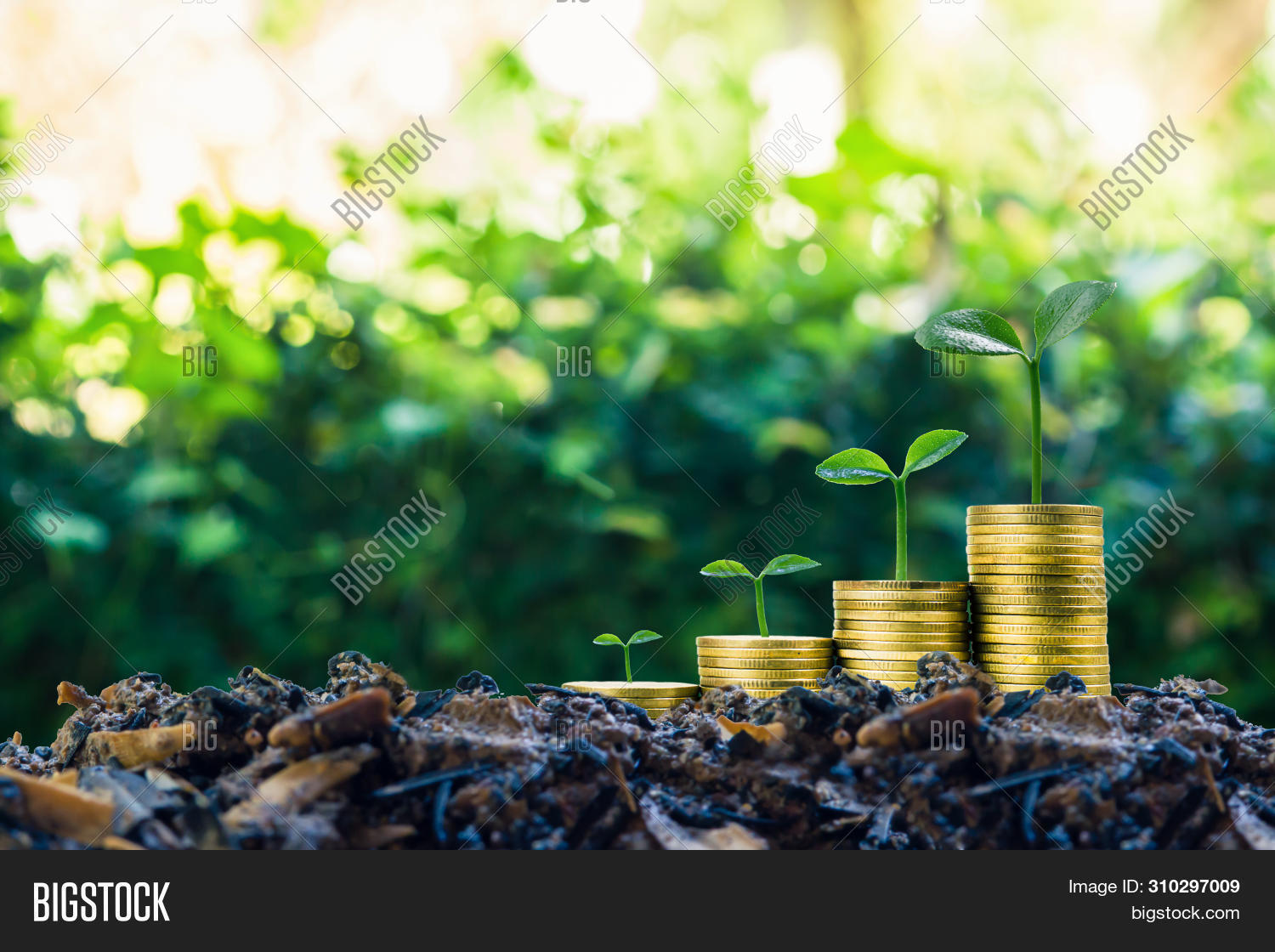 background,bank,banking,business,cash,coin,concept,currency,deposit,development,earnings,economic,economy,environment,finance,financial,fund,gold,green,grow,growing,growth,ideas,improvement,income,interest,invest,investment,investor,leaf,loan,making,money,mortgage,nature,plant,profit,rate,salary,save,savings,soil,stack,step,stock,success,target,tree,wealth