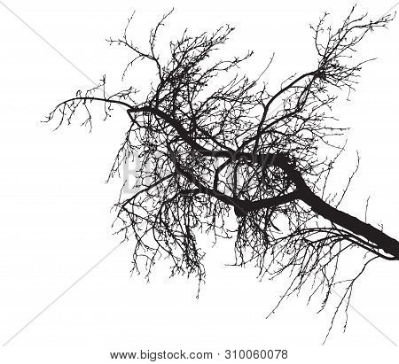 Bare tree branch silhouette on white background. Tree branch without foliage. Vector illustration stock photo