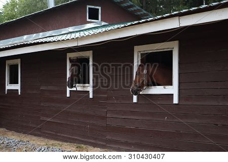 horses with the head outside of the stable. Head of horse looking over the stable window. brown horses on the farm look out of the windows stock photo