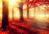 Autumn. Fall scene. Lovely Autumnal park. Magnificence nature scene. Pre-winter Trees and Leaves, fo