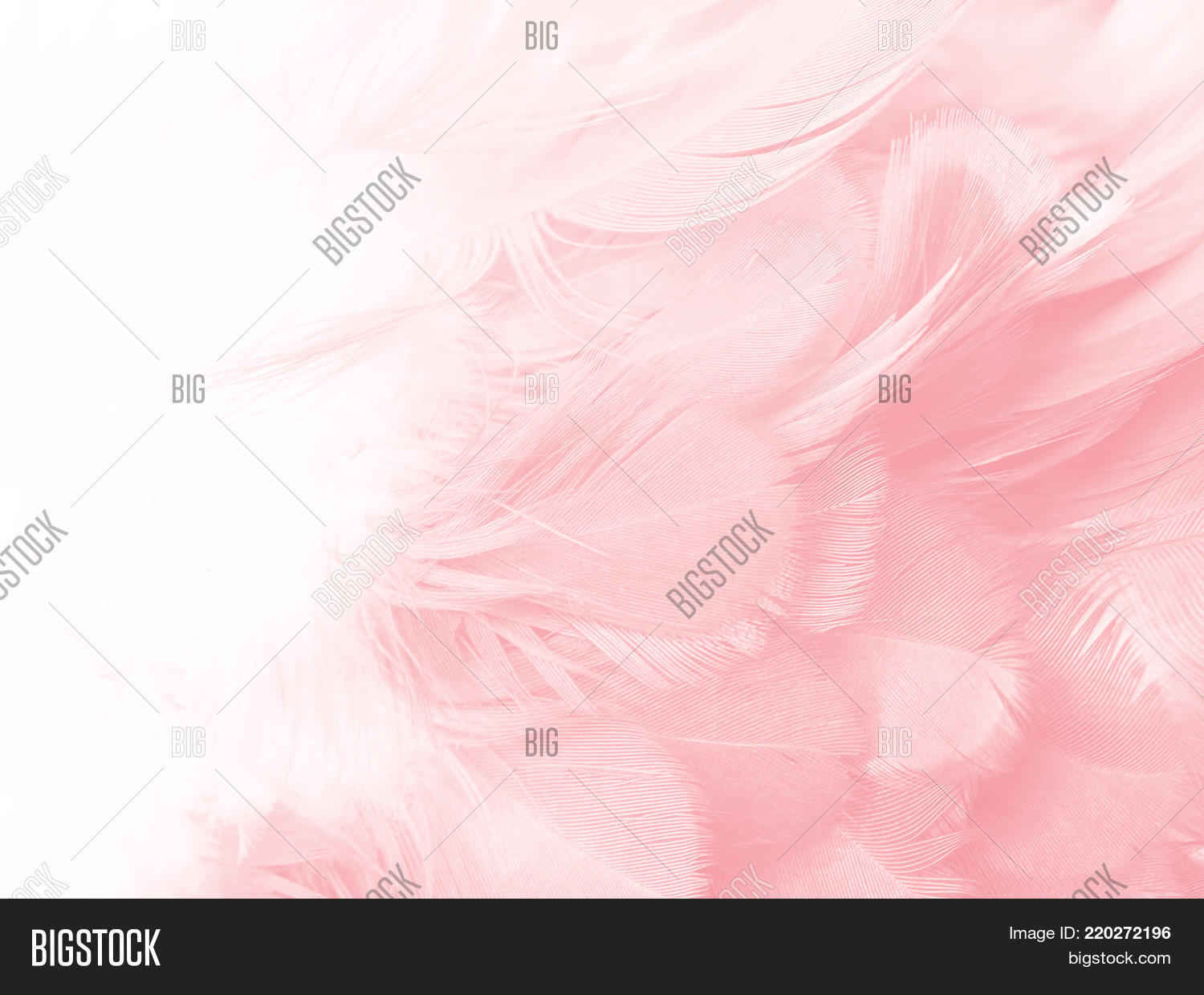 abstract,angel,background,black,bohemian,boho,chicken,closeup,color,copy,coral,dark,design,desktop,dove,elegant,fashion,feather,fluff,fur,heaven,image,interior,isolated,light,luxury,macro,nature,pastel,pattern,peacock,pigeon,pink,soft,space,style,subtle,swan,teal,texture,trend,vintage,wallpaper,watercolor,white,wings