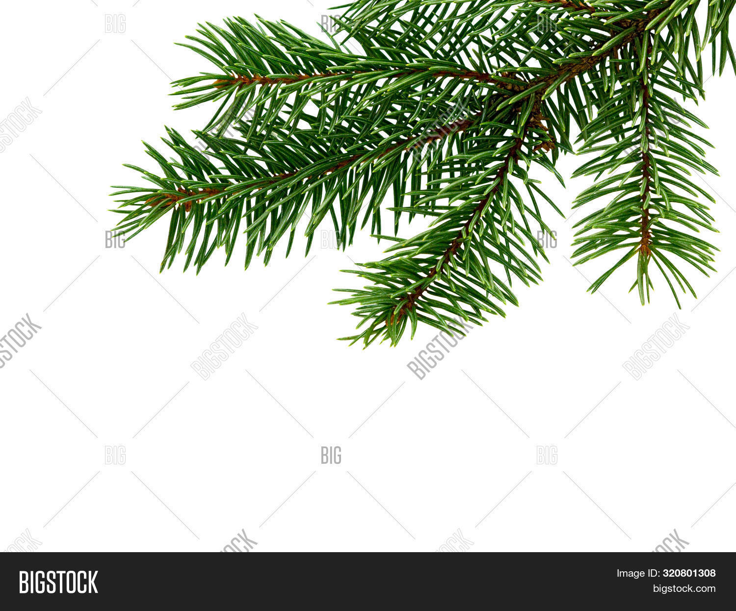 Fir Tree Branch Isolated On White Background. Pine Branch. Christmas Background.