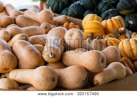A crop of squash varieties for sale in a market, including butternut, acorn, carnival, and fairytale. stock photo