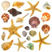 Varied confined ocean shells