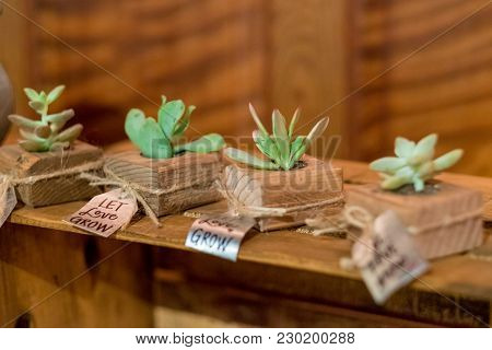Succulent wedding gifts or favors at a reception in California with tags and signs that say let love grow. stock photo