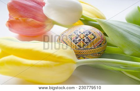 Lovely Blossoming Tulip Flower And Easter Colourful Egg