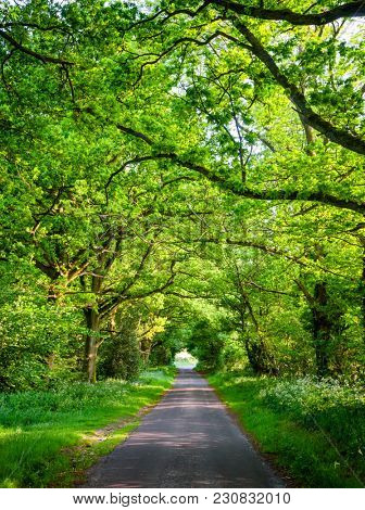 Scenic oak tree tunnel road in Southern England stock photo