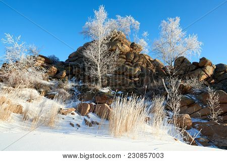 Birches and pines growing on rocks in winter. Hoarfrost on the tree. stock photo