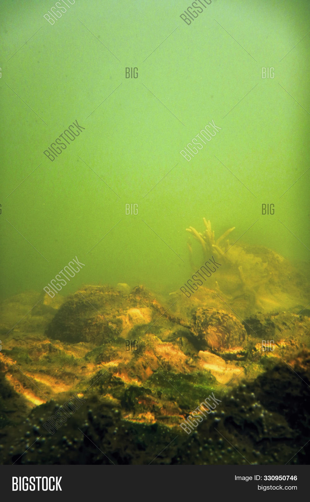 Freshwater,Sponge,Underwater,algae,amazing,aquaculture,aquarium,aquatic,background,beautiful,beauty,blue,branch,clear,cold,color,colorful,deep,ecosystem,environment,fish,flora,green,group,habitat,lacustris,lake,macro,natural,nature,outdoors,pond,red,river,scuba,spongilla,spongillidae,summer,tropical,under,water,weird,wild,wildlife,yellow