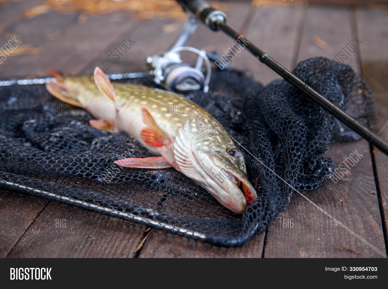 activity,angling,animal,autumn,big,catch,equipment,esox,fish,fishing,freshwater,head,hobby,leisure,lucius,lure,natural,nature,northern,outdoor,pike,predator,raw,river,scales,season,sport,trophy,water,wild,wildlife,wooden