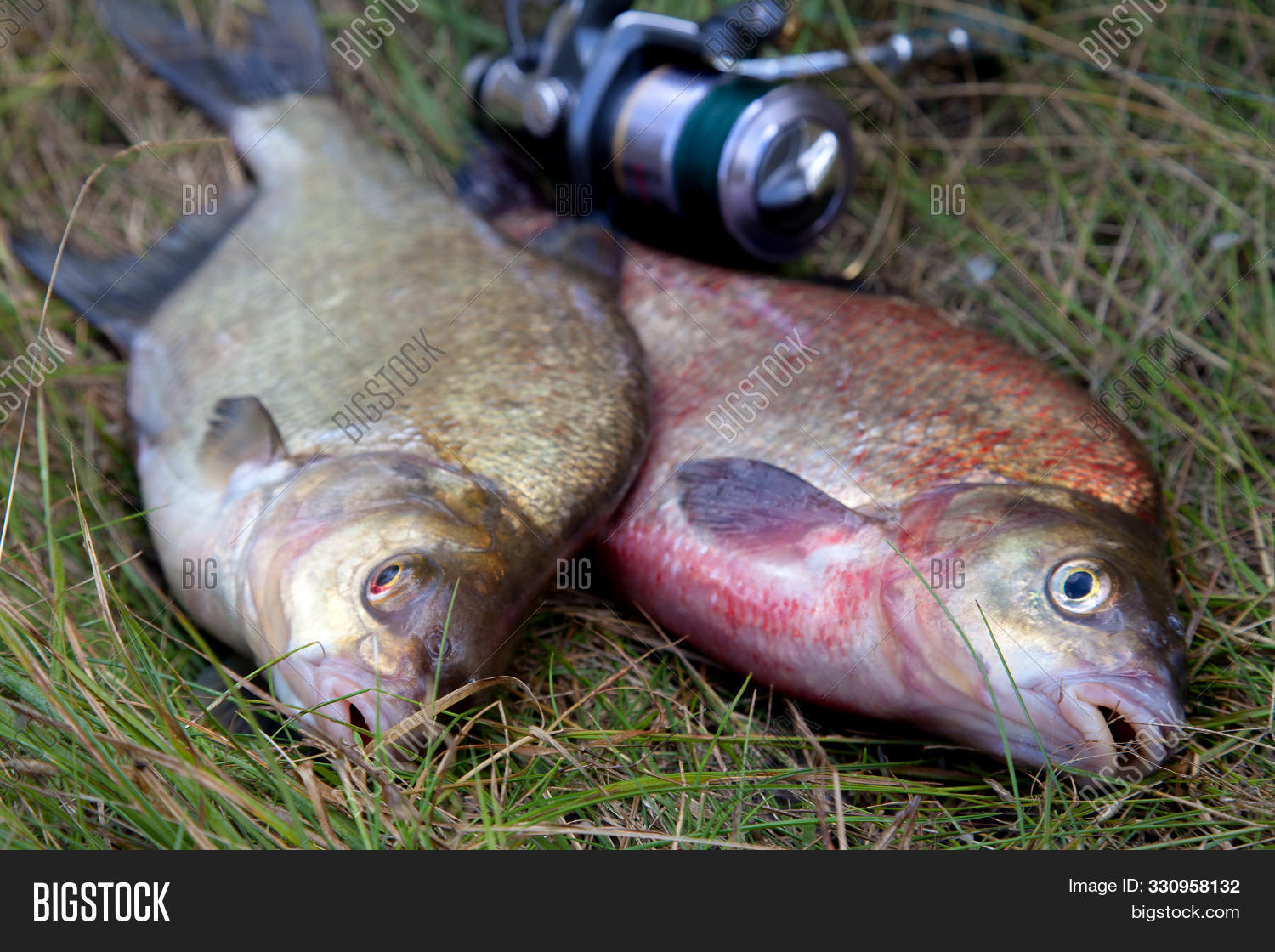 activity,angling,animal,autumn,big,catch,equipment,esox,fish,fishing,freshwater,head,hobby,leisure,lucius,lure,natural,nature,northern,outdoor,pike,predator,raw,river,scales,season,spinning,sport,trophy,water,wild,wildlife,wooden