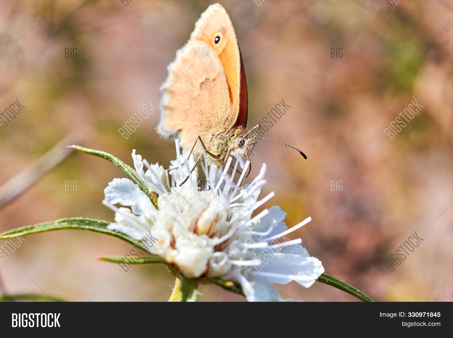 animal,background,beautiful,beauty,biology,blossom,bright,bug,butterfly,close,closeup,color,colorful,detail,drink,floral,flower,fly,garden,green,insect,macro,meadow,monarch,moth,natural,nature,nectar,pattern,photo,plant,pollen,purple,red,small,spring,summer,up,white,wild,wildlife,wing,yellow