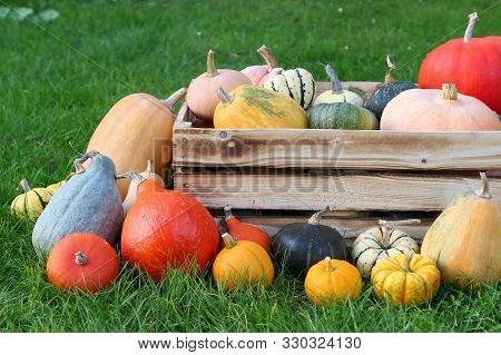 Colorful autumn pumpkins harvest in wooden box. stock photo