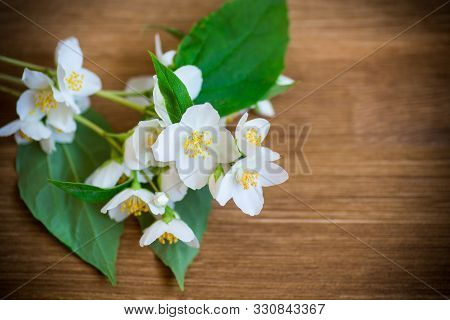 beautiful white jasmine flowers on a branch on table stock photo