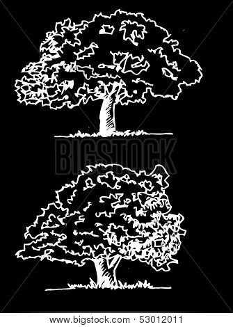 an images of  Vector trees with leaves leaf branch  silhouettes stock photo