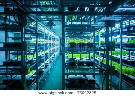 Plants are cultivated in hydroponic system stock photo