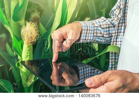 Farmer using digital tablet computer in corn field modern technology application in agricultural growing activity selective focus