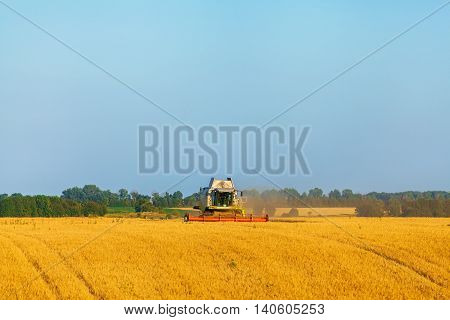 Harvester machine working in field . Combine harvester agriculture machine harvesting golden ripe wheat field. Agriculture