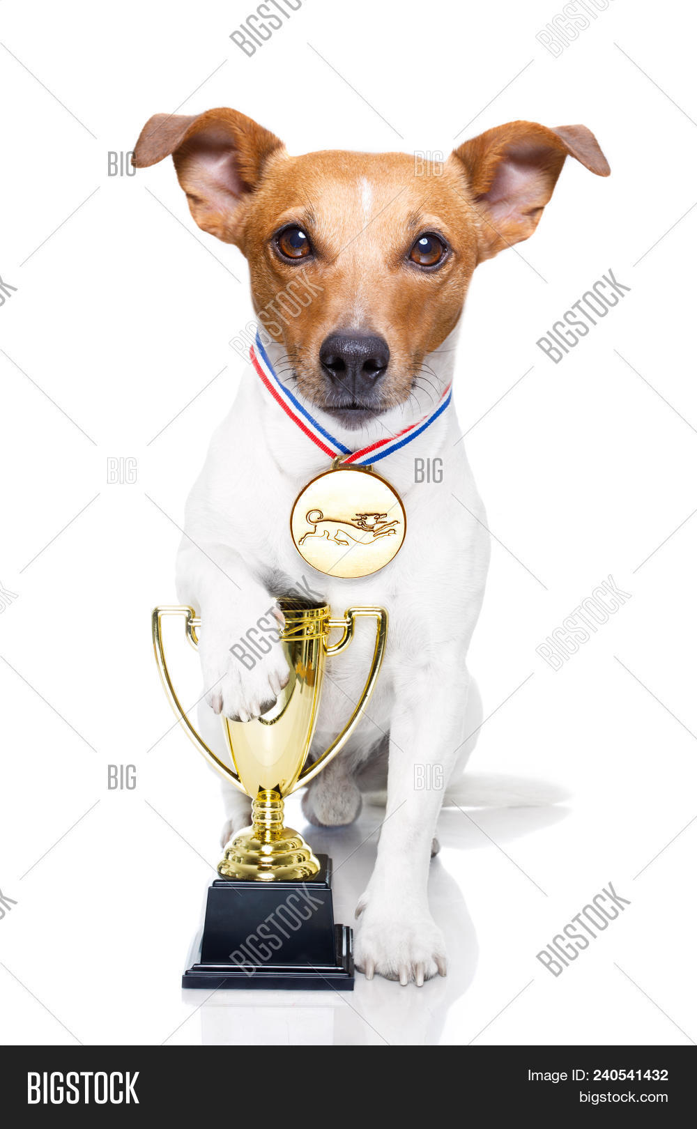 adorable,animal,award,background,beautiful,best,canine,champion,competition,contest,cup,cute,dog,doggy,exhibition,first,friend,funny,gold,honour,isolated,jack,joke,little,mascot,medal,merit,metallic,pedigree,pet,portrait,prize,puppy,purebred,russell,shiny,show,sport,strong,success,terrier,trophee,trophy,victory,white,win,winner