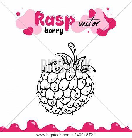 Raspberry vector illustration, berry clipart. Raspberry vector illustration for logo, design. Isolated raspberry vector illustration for menu, package. Hand drawn berry clipart, raspberry isolated. stock photo