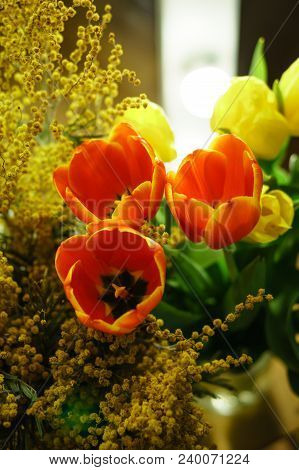 Floral bouquet of yellow and red tulips and yellow mimosa. Open buds of red tulips and inflorescences of mimosa in the foreground. Spring mood. stock photo