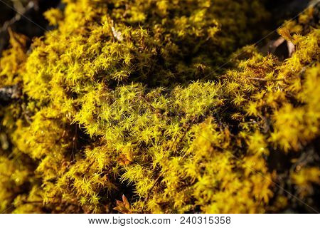 Mos fern plantation close up on deep mountain forest natural object stock photo