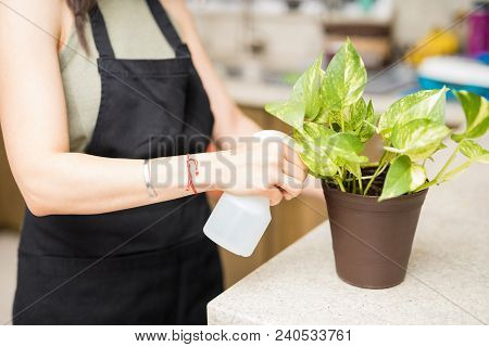 Woman maid hand sprinkling water in flower pot in kitchen stock photo