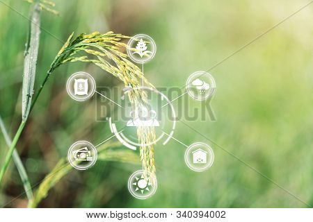 Innovation technology for smart farm system, Agriculture management, Hand holding smartphone with smart technology concept. asian male farmer working in Sugarcane farm To collect data to study. stock photo