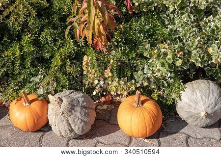 Orange and white pumpkins as decoration at outside of a agricultural market in front of a beautiful colored plant bed on a sunny autumn day. Background for natural health and nutrition concept. stock photo