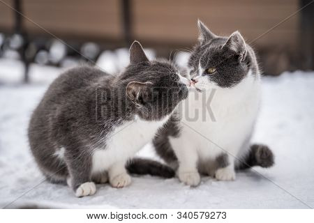 Two stray cats. Black miserable cats. The problem of protecting street animals. Two little kittens outdoors in summer. stock photo