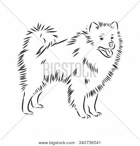 Wolfspitz dog sketch, domestic dog contour vector illustration stock photo