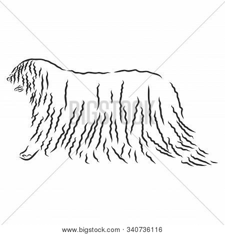 The Komondor , also known as the Hungarian sheepdog, is a large, white-coloured Hungarian breed of livestock guardian dog with a long stock photo