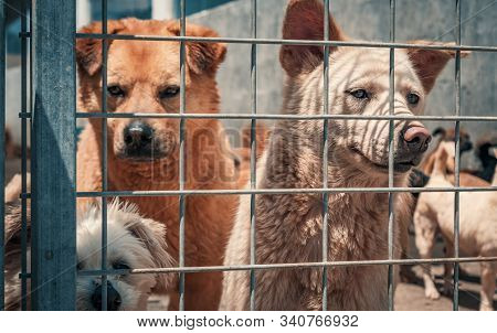 Unwanted and homeless dogs of different breeds in animal shelter. Looking and waiting for people to come adopt. Shelter for animals concept stock photo