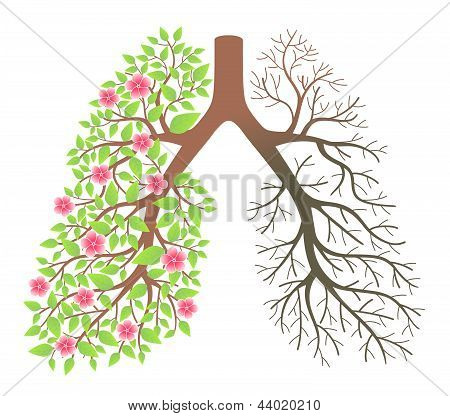 Lungs. Effect after smoking and disease on a white background stock photo