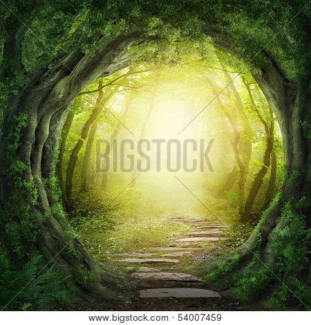 Road in enchantment dim woodland
