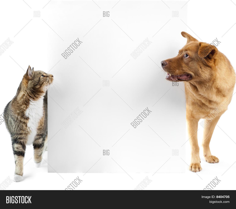Cat And Dog Around Banner 8404705 Image Stock Photo