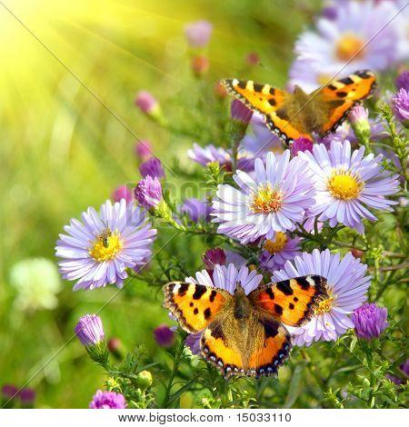 Deux papillons sur les fleurs