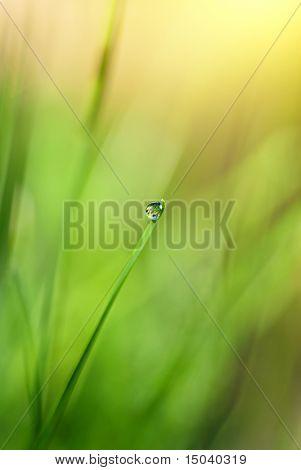 Herbe verte avec goutte d'eau et de lumière du soleil